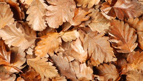 fogliesecche