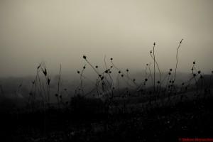 nebbia(StefanoManocchio)
