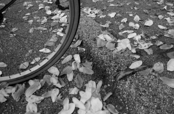 bici-fiori-1